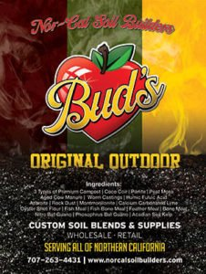 Best Soil for Marijuana
